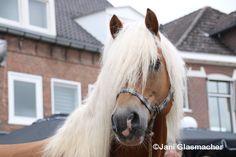 Paardenmarkt in Elst, Gelderland, AnimalPhotography, september 2015
