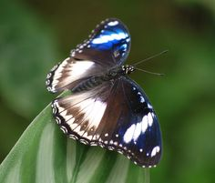 exotic butterfly pics | Exotic Butterfly | Flickr - Photo Sharing!