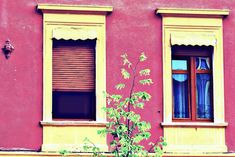Photo by Lolli Elena-b Window Coverings, Facade, Awesome, Pink, Window Treatments, Window Sun Shades, Facades, Pink Hair, Roses