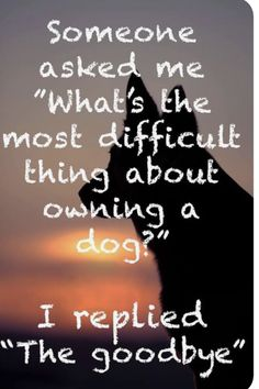 Losing A Dog Quotes Grief Rainbow Bridge Pet Loss Losing A Dog Quotes, I Love Dogs, Puppy Love, Dog Poems, Dog Qoutes, Pet Quotes, Pet Loss Grief, Loss Of Dog, Goodbye Quotes