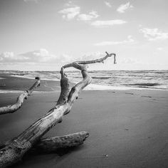 The Darß is the middle part of the peninsula of Fischland-Darß-Zingst. Canon 5D MK II, Canon EF 35mm 1:1,4 L USM. Silver Tree, Artwork by Moritz Braun.