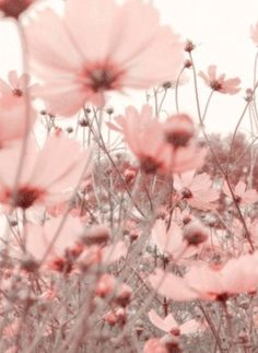 Iphone Wallpaper - Parures Housses de Couette Floral - Iphone and Android Walpaper Baby Pink Aesthetic, Aesthetic Colors, Flower Aesthetic, Nature Aesthetic, Makeup Aesthetic, Spring Aesthetic, Aesthetic Grunge, Aesthetic Vintage, Aesthetic Pictures