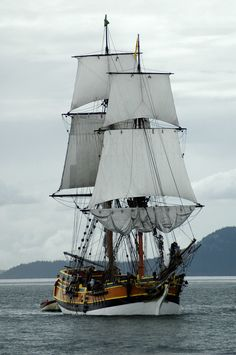 animalfunwithnature: The Lady Washington by ~terrybare  Petit: gnight, all xo sweetest dreams