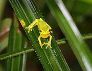 #frog #sustainability #ecotourism #Queensland #Australia Queensland Australia, Frogs, Sustainability, Parks, Centre, Cruise, Wildlife, River, Cruises