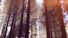 desktop-wallpaper-laptop-mac-macbook-air-nh67-forest-wood-tree-light-summer-nature-flare-wallpaper