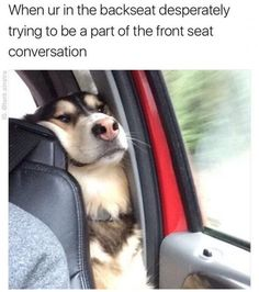 Funny Animal Pictures of the Day - 24 Pictures - Daily LOL Pictures - Funny Animal Pictures . - Funny animal pictures of the day – 24 pictures – Daily LOL pictures – Funny animal pictures o - Funny Animal Jokes, Funny Dog Memes, 9gag Funny, Crazy Funny Memes, Really Funny Memes, Memes Humor, Cute Funny Animals, Funny Animal Pictures, Funny Laugh