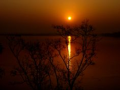 GOLDEN GLOWING SUN AT RISING IN SUNDARBON FOREST