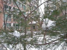 눈오는날풍경.