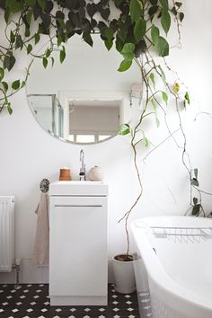 Plant - Devils Ivy Driptopia Planter - Iggy and Lou Lou Tapware - Ideal Standard Square bevelled edge mirror - Bunnings
