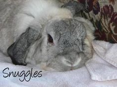 You can vote for Snuggles as Pet of the week on our Facebook Fan page by posting his name on our wall. www.facebook.com/petpages