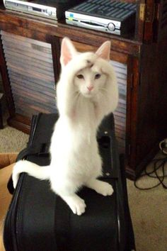 21 Cats Who Think They're People