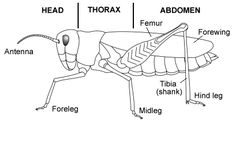 Pin by Margaret Dyrness-Mather on 7th Grade Biology