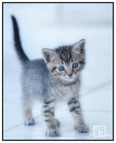 Cucciolo di gatto #micio