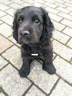 Dog And Puppies Drawings .Dog And Puppies Drawings Calm Dog Breeds, Dog Breeds Little, Best Dog Breeds, Fancy Dog Collars, Luxury Dog Collars, Asian Dogs, Dog Breeds That Dont Shed, Dog Anatomy, Best Dog Toys