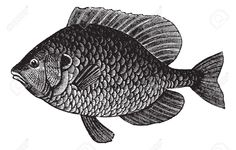 fish engraving - Google Search