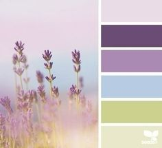 lavender hues - color scheme from Design Seeds Colour Pallette, Color Palate, Colour Schemes, Color Combos, Color Patterns, Lavender Color Scheme, Lavender Blue, Lavender Fields, Pink Blue