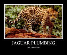 Animals Starting With J – Jaguar Animal Jaguar, Jaguar Leopard, Clouded Leopard, Cat Weight Chart, Jaguar Habitat, Jaguar Tier, Margay Cat, Dangerous Animals, Deadly Animals
