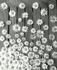 background, black and white, daisy, flowers, wallpaper Margaritas Tumblr, Phone Backgrounds, Wallpaper Backgrounds, Flower Wallpaper, Iphone Wallpaper, Colorful Wallpaper, Love Flowers, Beautiful Flowers, Daisy Flowers