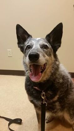 Brady had CLEAR SCANS TODAY!!! 19 MONTHS!!!!!! #tripawds
