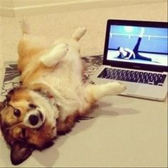 Funny Picture Dump Of The Day – 64 Pics  (Doggy Workout)