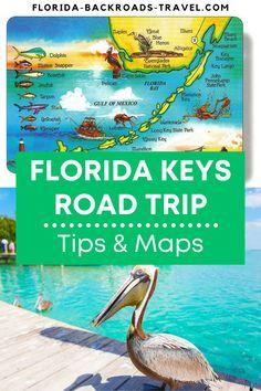 Florida Travel Guide, Florida Trips, Florida Fish, Seaside Florida, Visit Florida, Florida Living, Florida Vacation, Miami Florida, Florida Beaches