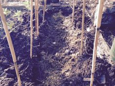 The Hilltop Gardener: A Runner bean trench