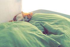 Ginger kitten  Mykonos, Greece (Hellas)  Cutie
