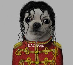Someone dressed up their chihuahua like Michael Jackson …this is a Thriller (The likeness is scary!)