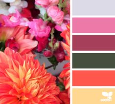 Flora Hues - http://design-seeds.com/index.php/home/entry/flora-hues48