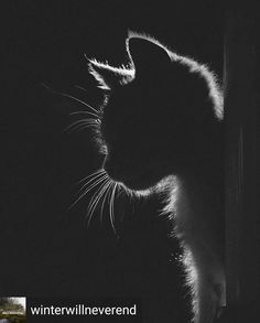 Things that make you go AWW! A place for really cute pictures and videos! Cat Anime, Black Paper Drawing, Scratchboard, Cat Photography, Photography Aesthetic, Tier Fotos, Beautiful Cats, Cat Memes, Cat Love