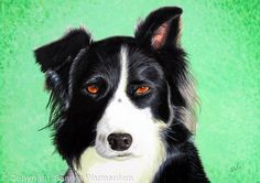 Border Collie, Painting - Acrylic on Canvas