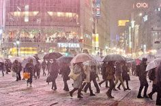 Shibuya snow 2014 | Flickr - Photo Sharing!