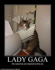 lmfao! @Katie Schmeltzer Marie How about this costume for Cali??? haha  Lady Gaga:  Her costumes are inspired by this cat.