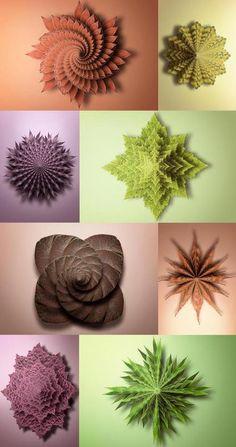 Fibonacci Sequence in Nature