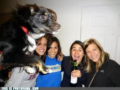 flying dog photobomb