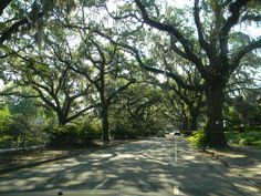 Dreamy, old Oakes covered with Spanish Moss. Savannah, GA