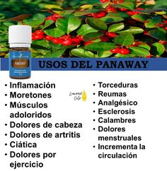 Young Essential Oils, Young Living Oils, Herbs, Organic, Home, Young Living Essential Oils, Natural Oils, Herb, Young Living Congestion