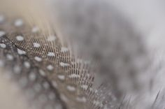 Soft Echo. Angels Flight Series by Jenny Rainbow