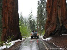 """Sequoia Park, California Would like to go someday. Isn""""t this much prettier than New York!!!!"""