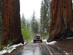 Sequoia Park, California