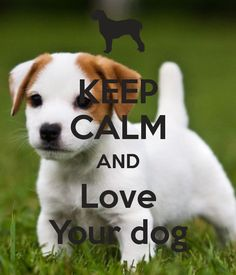 'KEEP CALM AND Love Your dog' Poster