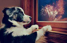 Como cuidar do seu cão durante a virada de ano novo