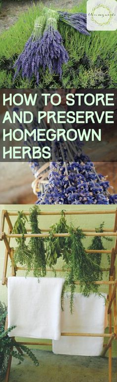 How to Store and Preserve Homegrown Herbs - Bless My Weeds| Homegrown Herbs, Herb Gardening, Herb Gardening Tips and Tricks, Preserve Homegrown Herbs, How to Preserve Herbs #Herbs #HerbGarden