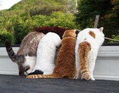 軽トラの4匹 - かご猫 Blog