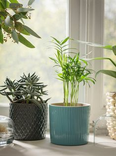 Homing CHIAFRÖN Plant pot - turquoise - IKEA Using Concrete for Interior Applications Concrete is an At Home Furniture Store, Modern Home Furniture, Indoor Plant Pots, Potted Plants, Ikea Plants, Ikea Ps 2014, Luz Solar, Easy Care Plants, Turquoise