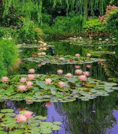 Water lily, a flower in the water and a great decoration for your garden – Fotografie Beautiful Landscapes, Beautiful Gardens, Beautiful Flowers, Beautiful Places, Landscape Photography, Nature Photography, Outdoor Photography, Nature Aesthetic, Aesthetic Plants