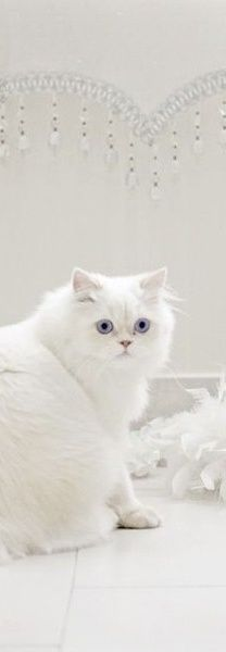 . Pretty Cats, Beautiful Cats, Animals Beautiful, Cute Animals, Hey Gorgeous, Hello Beautiful, Animal Gato, Mundo Animal, Crazy Cat Lady
