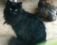Koal (stray cat)