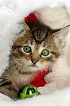 "* * "" And maybe I frow ornament on de floor so Santa says:' No! Bad Kitteh !' and I goes back wif him."""