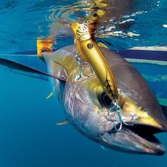 An angler can launch a popper to yellowfin around the dolphin and get an instant hookup. This sort of run-and-gun fishing is seldom boring. Tuna Fishing, Trout Fishing, Fly Fishing, Fishing Tips, Fishing Lures, Salt Water Fish, Salt And Water, Pesca Spinning, Yellowfin Tuna